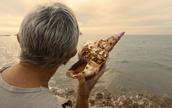 Image result for hearing the sea in a shell