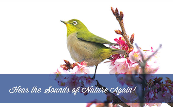 Hear the Sounds of Nature Again!
